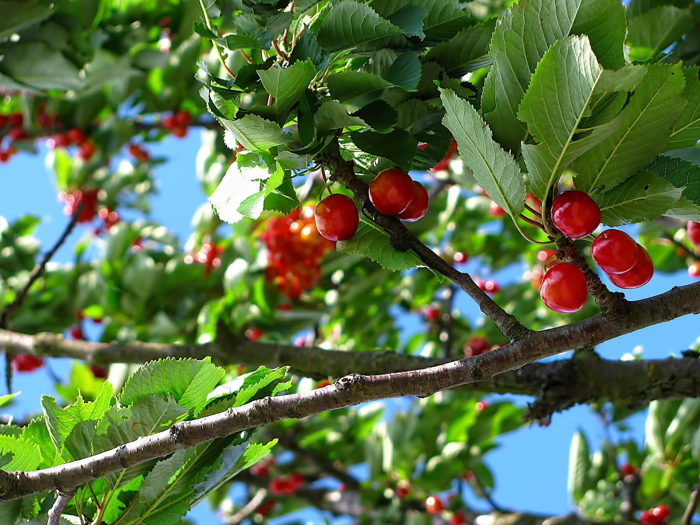 Best Fruit Picker Poles